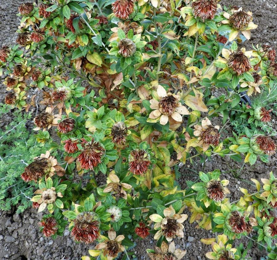 וחריע לגידול זרעים בניר גלים. צילום: איתן סלע