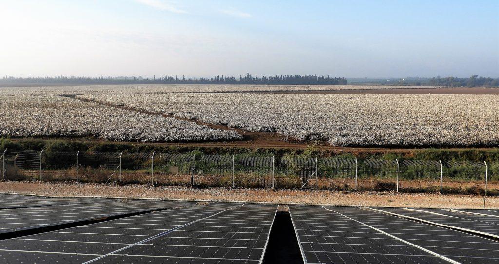 Field-Cotton