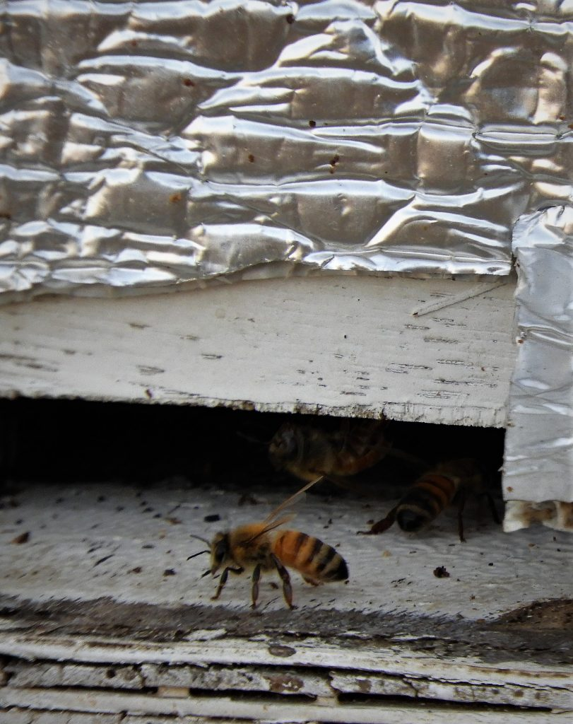 Bee-in-the-Hive