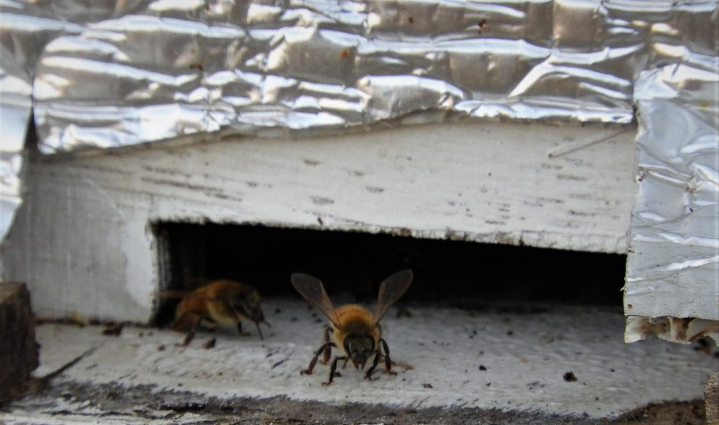 Bees-ready-for-winter